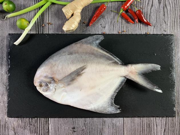 白鯧魚 1